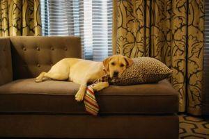 Lifestyles AP Poll Pets
