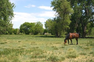 A Horse In A Pasture.
